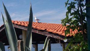 Kaktus-Bar Insel Ceja