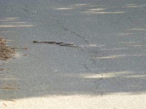 Tote Schlange auf Sardinien